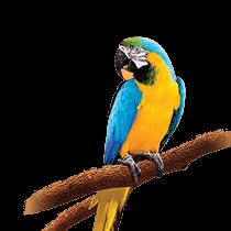 Parrots & Conures